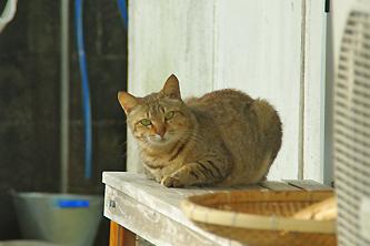 猫のぐすく