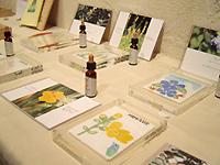 「フラワーエッセンスの植物たち with コトリ工房」案内画像 展示イメージ