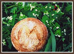 ミウラの天然酵母パン